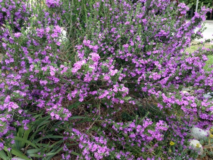 58 best low maintenance shade plants for north texas for Low maintenance bushes for shade