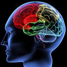 'Darmbacteriën veranderen manier waarop ons brein werkt' In New Scientist wordt de invloed van darmbacteriën op de hersenen besproken, door professor neurowetenschappen John Cryan en pr…