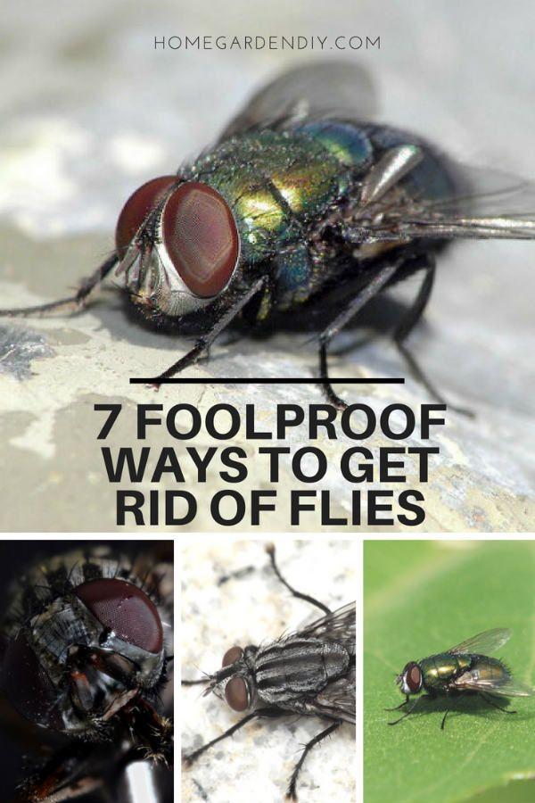 7 Foolproof Ways To Get Rid Of Flies Home Garden Diy In 2020 Get Rid Of Flies Fly Repellant Flies Repellent Outdoor