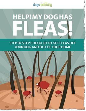 You don't have to expose your dog to toxic flea and tick meds. Here are our best home remedies for keeping fleas out of your home and off of your dog.