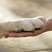 Vielen Dank Freund, ich fühle mich schlecht, wenn Ihr Fuß immer von mir unterstützt wird. Danke fürs da sein.