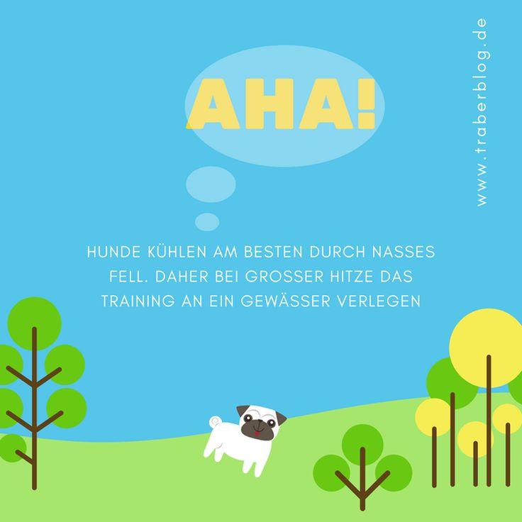 Hitzefrei für Traber: Tipps für Pferd & Co. – traberblog.de