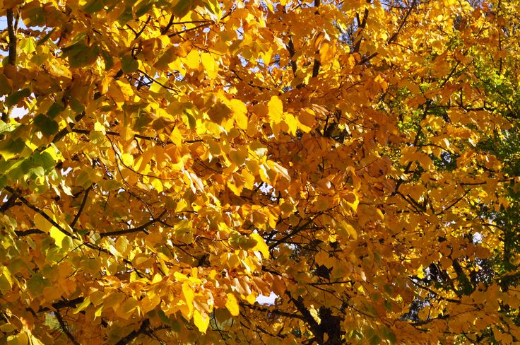 Colors of autumn at Casafrassi