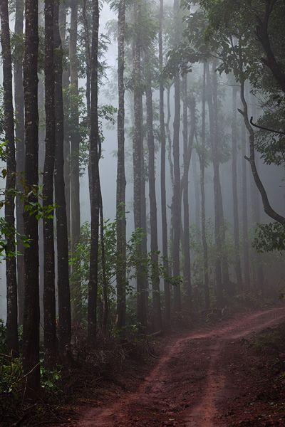 chikmagalur, India