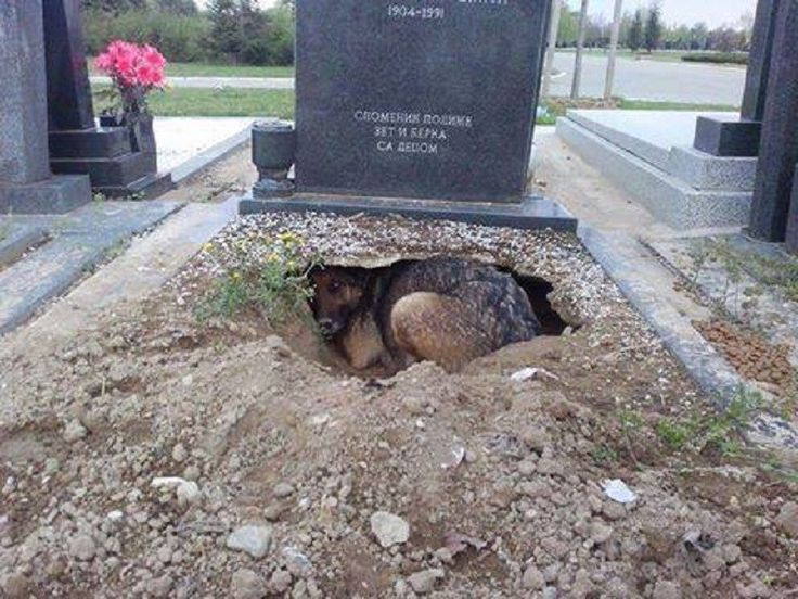 Ez az igazi hűség! Ez az amit egy ember sosem fog felülmúlni,egy kutya hűségét! - MindenegybenBlog
