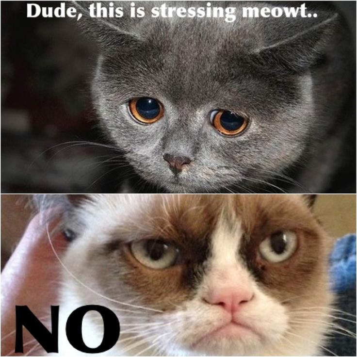 a2acf0ae403105df2d01940f0b1c9e58 grumpy cat quotes grumpy cat meme 342 best grumpy cat memes images on pinterest animals, grumpy,Frowning Cat Meme