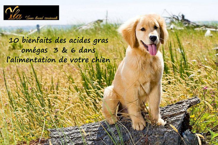 Aliment enrichi en oméga-3 et oméga 6: l'atout santé pour votre chien!