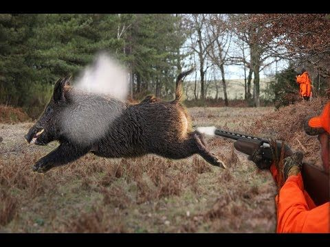 Top 10 Best Shots - Wild Boar Hunting,Chasse Au Sanglier - YouTube http://riflescopescenter.com