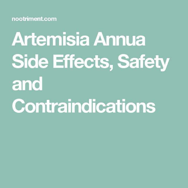 Artemisia Annua Side Effects, Safety and Contraindications