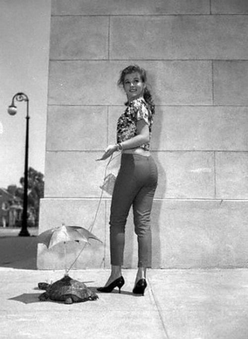Necessary Pictures of young ann margret