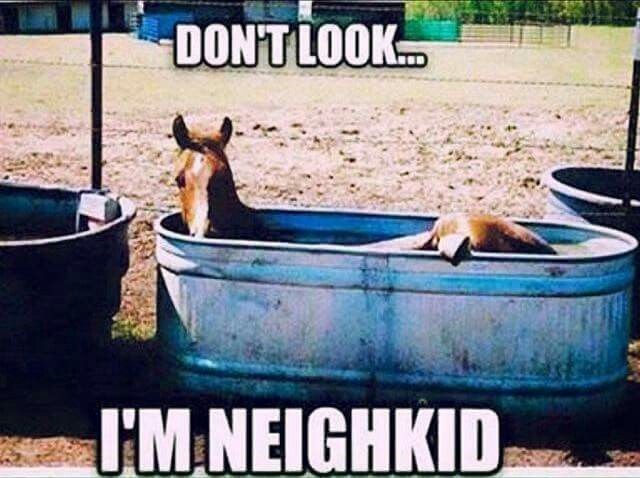 """Horse humor quote, """"Don't look, I'm neigh kid"""". Funny horse laying in his trough of water cooling off! He is so cute!"""