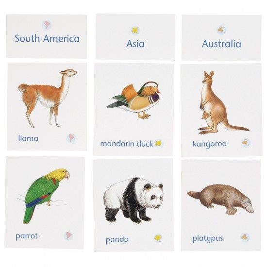 The Most Popular Designs Australians Want In Their Homes: Animals Of Seven Continents Classification Cards With