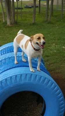 Repurpose an old tire by painting it a pretty color, partially-burying it, and letting your dog play King of the Mountain!