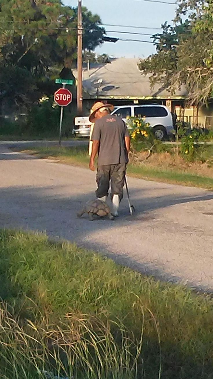 My neighbor out for his daily walk with his tortoise. http://ift.tt/2el2nvA