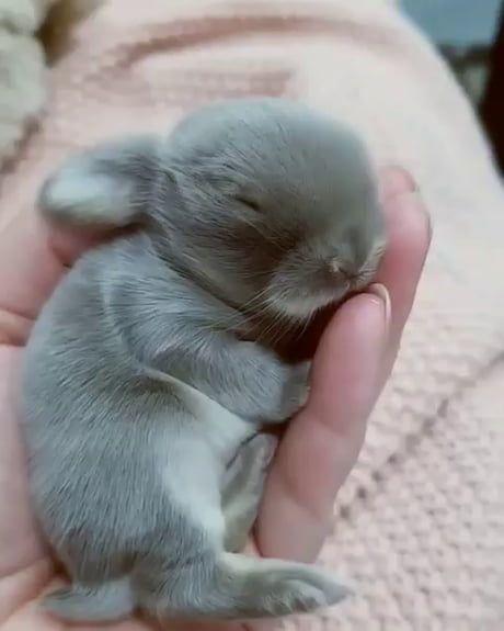 The sleepiest baby bunny