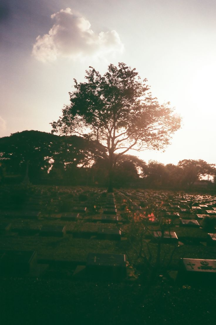 Kanchanaburi War Cemetery, Kanchanaburi, Thailand. Taken by ChickKa Chick with OLYMPUS XA loaded with Fujifilm Velvia 100 (Expired) in cross process. #olympus #olympusxa #thailand