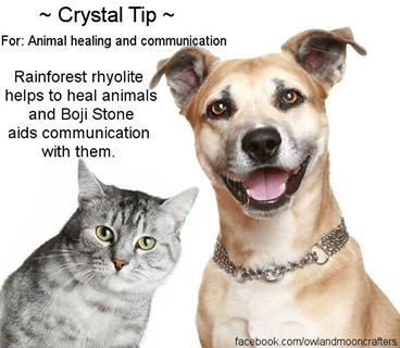 Healing crystal tip for pets - www.crystalage.com
