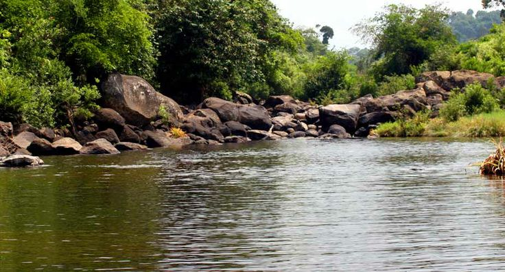 River at tea estate