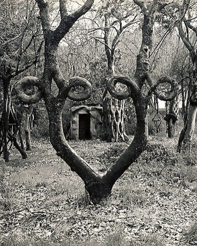 Arborsculpture, in 1947 Axel Erlandson opened the Tree Circus – The World's Strangest Trees, along the roadside in Santa Cruz, California. Today they have largely been moved to Bonfante Gardens in Gilroy, California. Arborsculpture at it's finest...