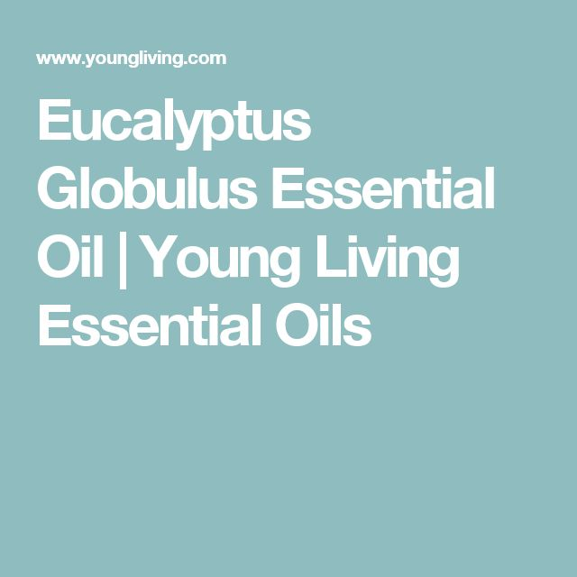 Eucalyptus Globulus Essential Oil | Young Living Essential Oils