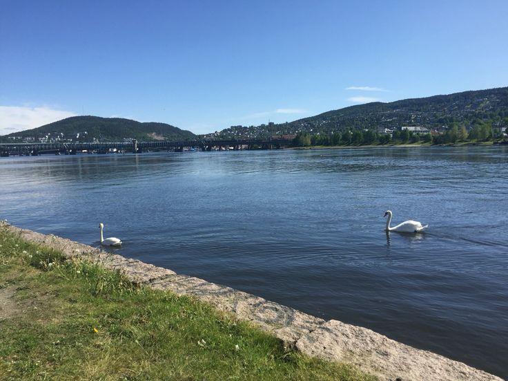 26.05.16 Drammen - ved elvebredden