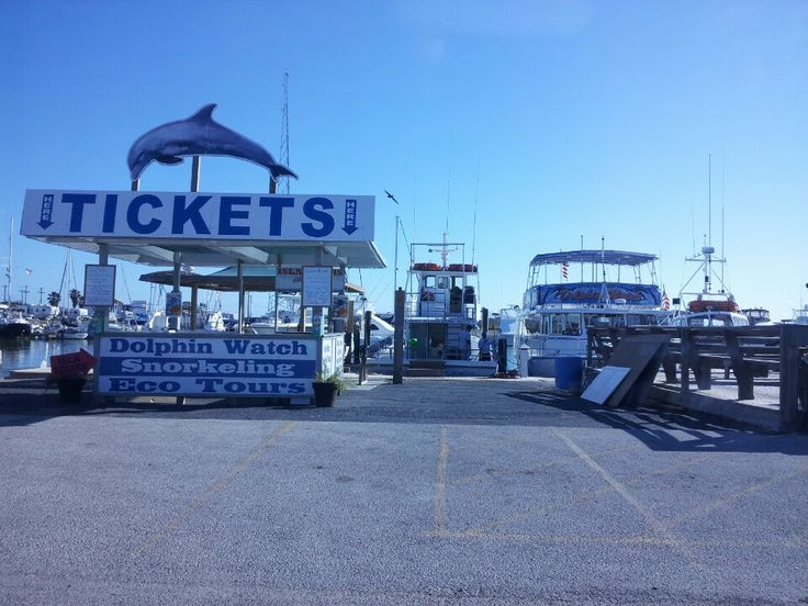 Padre-Dolphin Watch, Sunset, Fishing, and Firework Cruises