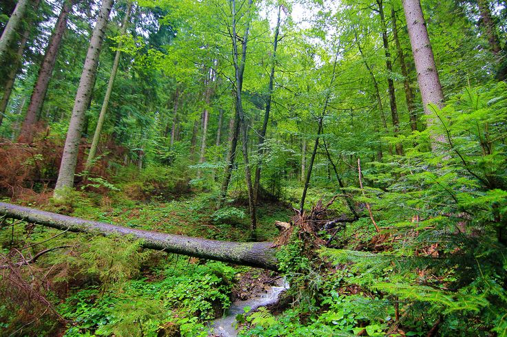 Wild Forest in the Carpathian Mountains - http://lightorialist.com/wild-forest-carpathian-mountains/