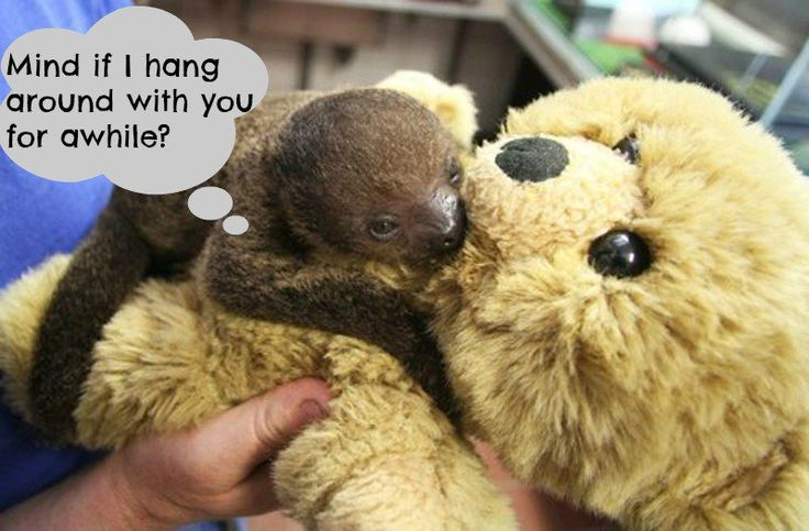 Cute Sloth Meme Meme Template Search Imgflip Valentine Sloth Etsy