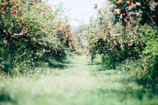 Garden / Hasbrouck House