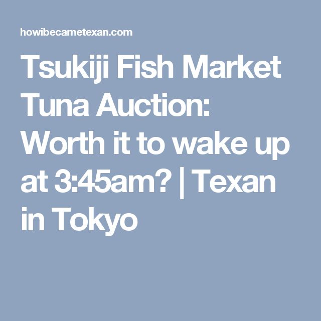 Tsukiji Fish Market Tuna Auction: Worth it to wake up at 3:45am? | Texan in Tokyo