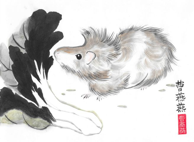 Bedhead with Breakfast Bok Choy by Tracie Griffith Tso of Reston, Va. #guineapig