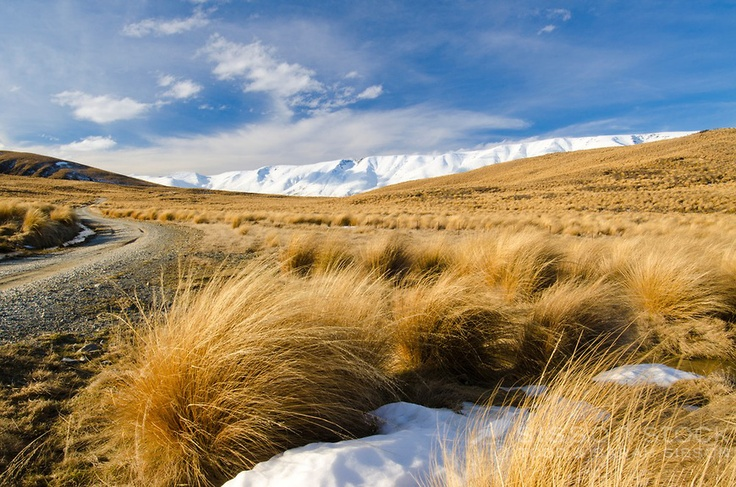 Hawkdun Range Road, tussocks and the Hawdun Range, Central Otago, New Zealand