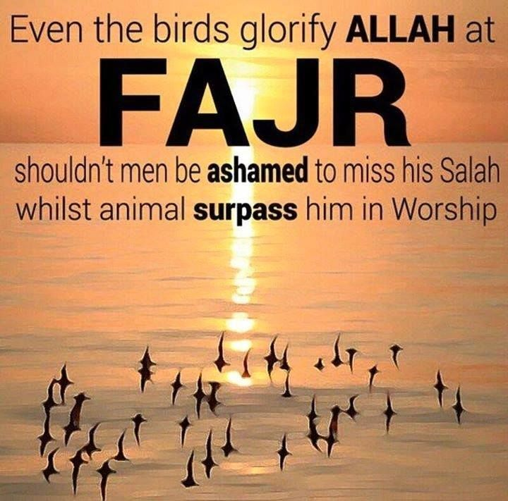 This is so true when I hear the birds at fajr time and the silence of the night and my head in sujood I have never felt closer to Allah :')..