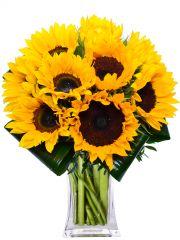 SLUNEČNICE-rozvoz květin