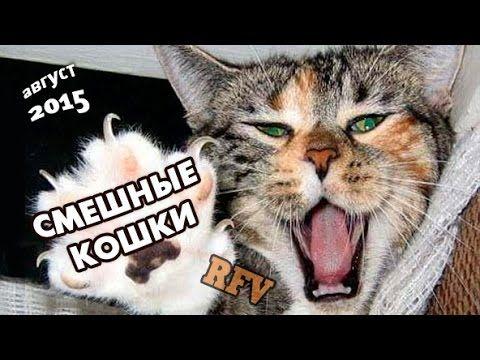 Приколы про кошек #19 ∙ Приколы про животных 2015 ∙ Funny Cats Compilati...