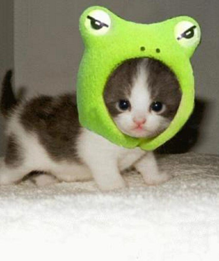 It's a cute little kitty
