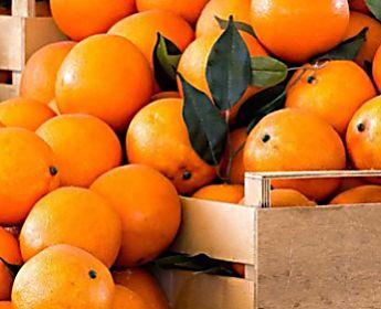 Logistica alimentare: come avviene il transporto del cibo dal produttore al consumatore