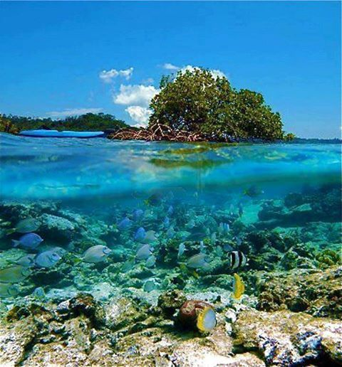Come explore the magical waters of the Bay Islands; home to the 2nd largest barrier reef in the world. The colors of this underwater oasis will take your breath away.