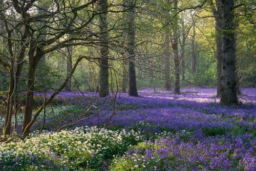 floralls: by Steve Docwra : 👽🎃👽🎃👽🎃👽🎃