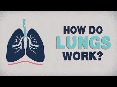 Respiratory System Lesson                                                                                                                                                                                 More