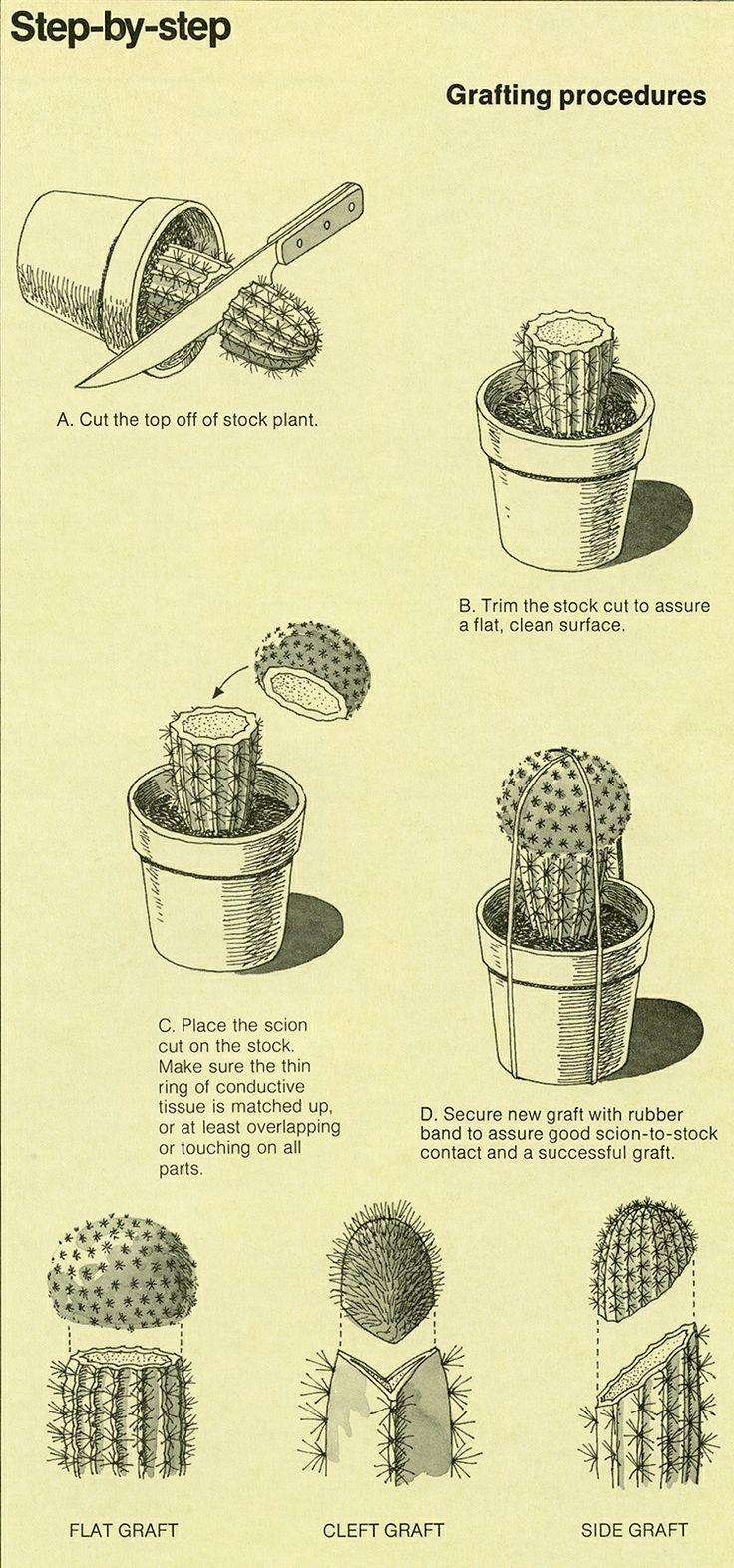 propagazione piante grasse