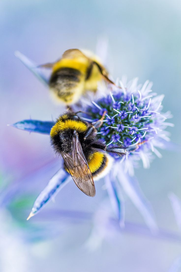 Bee Buziness by Tim Caldbeck on 500px