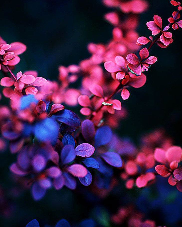 The Pink Beauty 2 By Dmitriyphoto Pink Flowers Wallpaper Flower Wallpaper Beautiful Nature Wallpaper