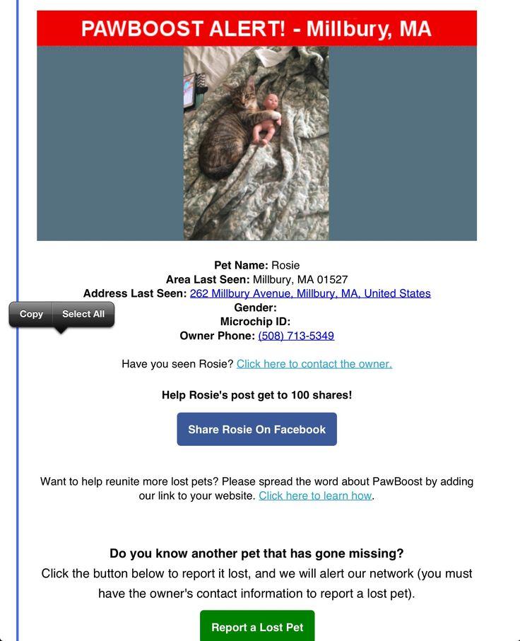 Lost Cat Named Rosie: Millbury, MA