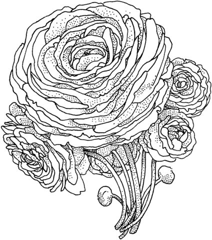 Peony Flower Coloring page