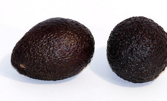 The Avocado Boom