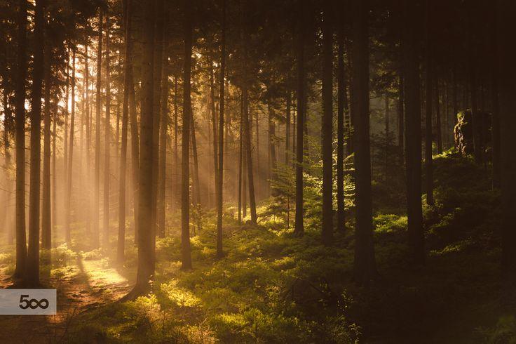 Morning Forest by Tomáš Hudolin on 500px