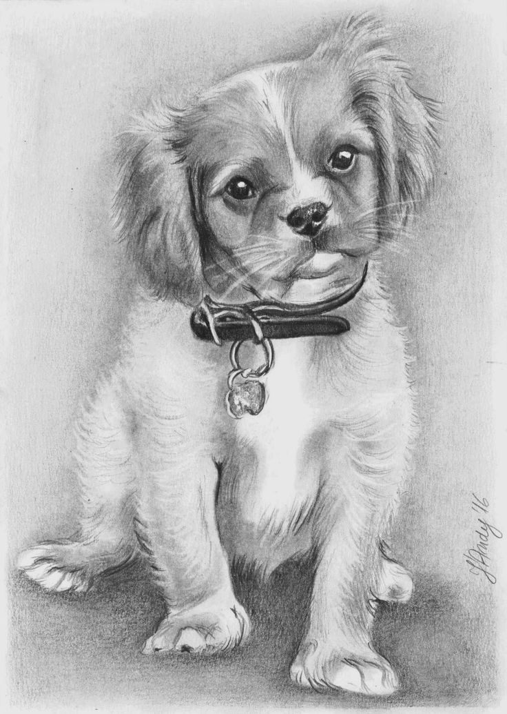 Cute dog pencil drawing