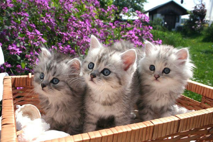 Trochę słodkości w słoneczny dzień :) #fototapeta #fototapeta24pl #kotki #kot #cat #sweet