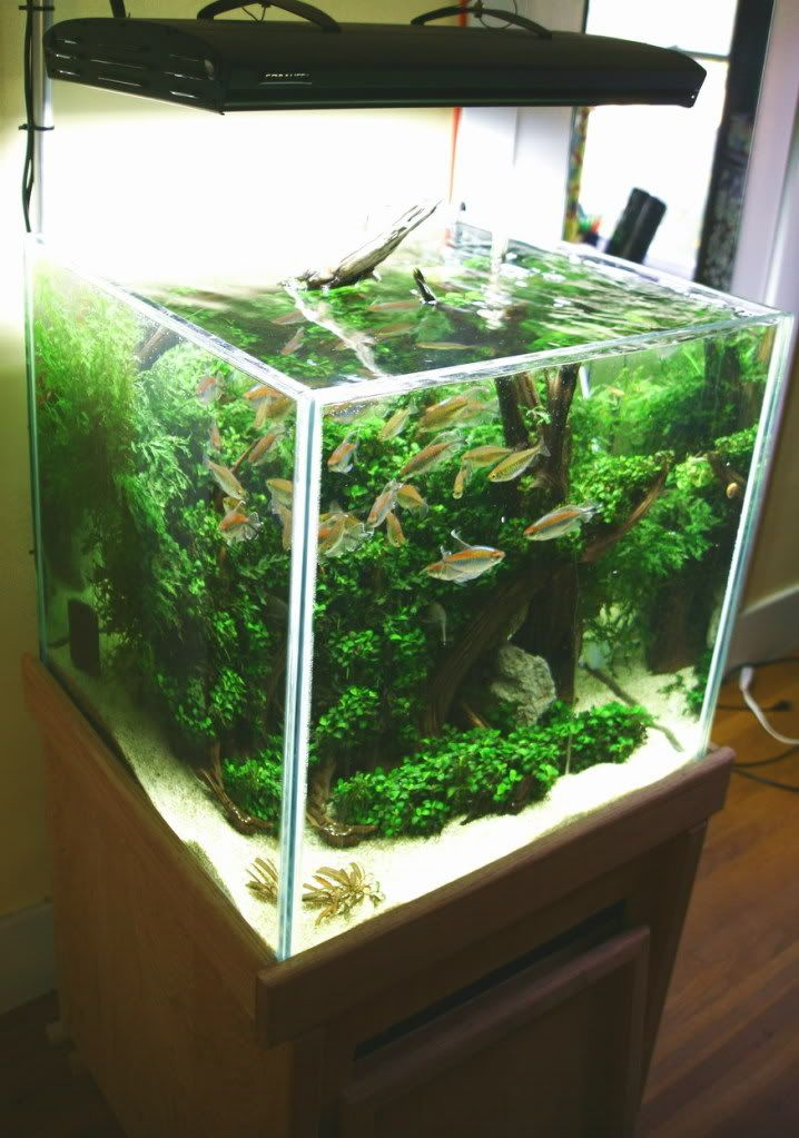 Time to do something different to the 120 gallon and the for Aquarium cube